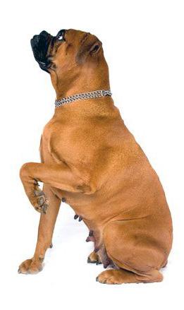 mein alter hund tierarztpraxis dr kleint katzenelnbogen im rhein lahn kreis. Black Bedroom Furniture Sets. Home Design Ideas